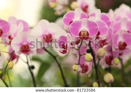 Pink orchid blossom in the garden