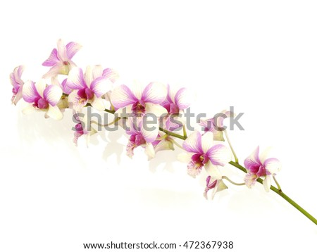 pink orchid flower bud isolated on white background