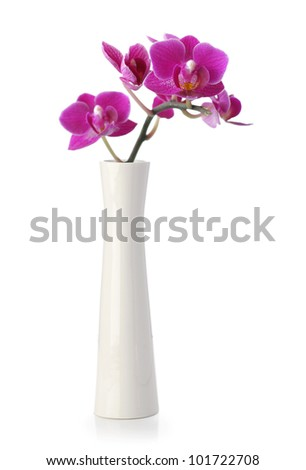 Pink Orchid flower in white vase isolated on white - stock photo