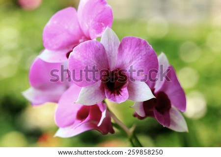 Pink orchid flowers