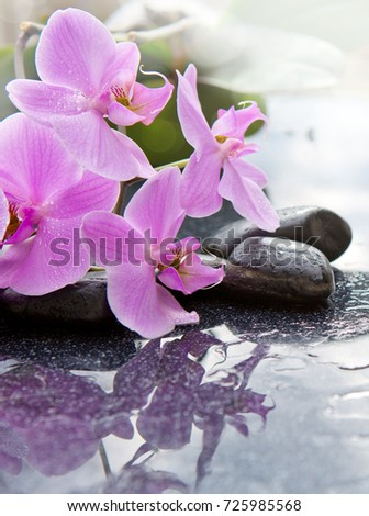 Pink orchid flowers and stone with water drops isolated on black background.