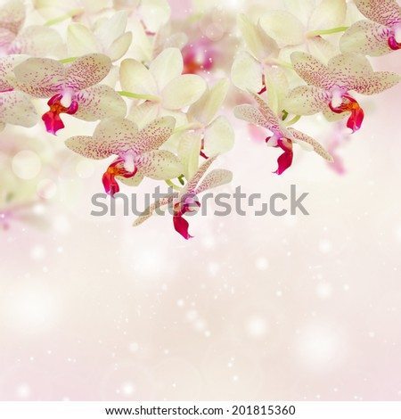 pink orchid flowers close up  on defocused background - stock photo
