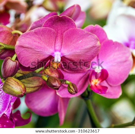 pink orchid flowers in florist shop