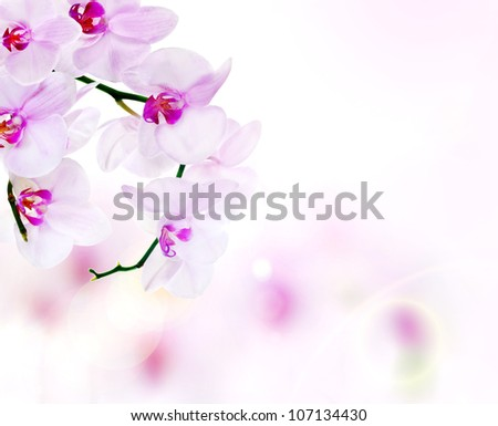 pink orchid flowers on light background - stock photo