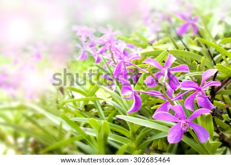 Pink orchid flowers/Spring flowers/ Spring Background - stock photo