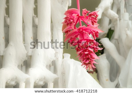 pink orchid flowers With white wooden background