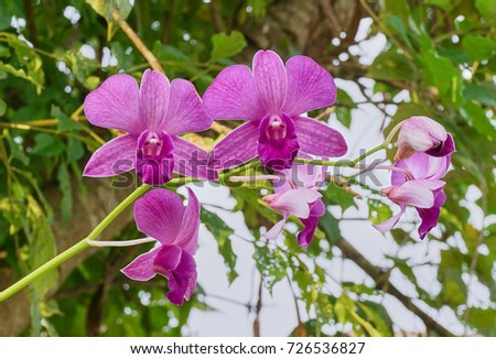 Pink orchid in the garden and natural bokeh background.