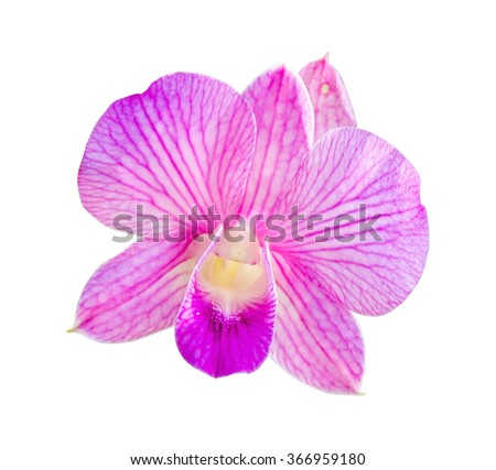 Pink orchid isolated on a white background.