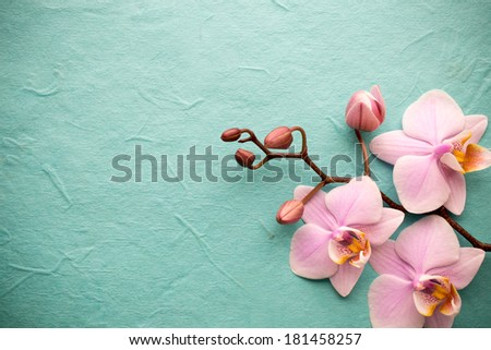 Pink orchid on a wooden background.