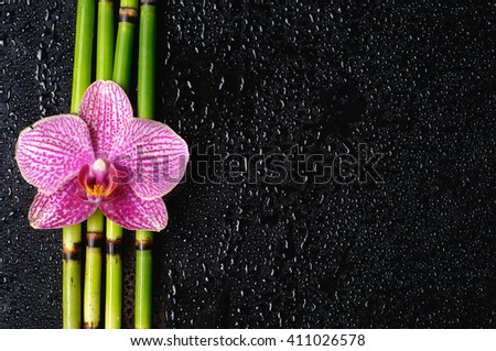 Pink orchid on bamboo grove-wet background  - stock photo