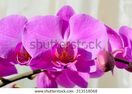 Pink orchid on beige background - stock photo
