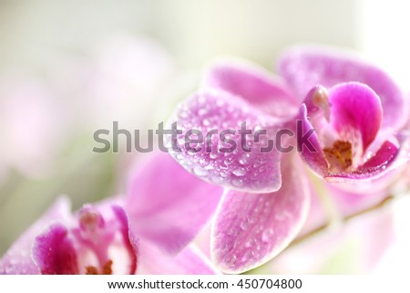 Pink orchid on green background