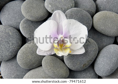 pink orchid on pebbles