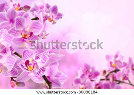 pink orchid on the pink background