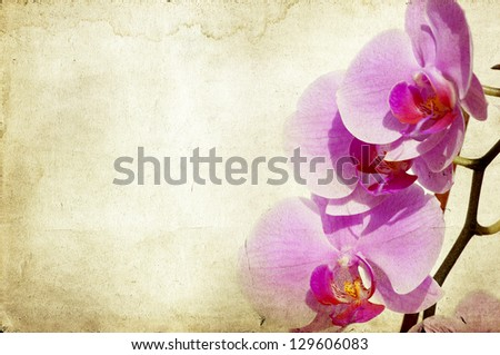 Pink orchid on vintage background