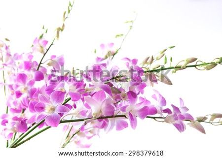 pink orchid stem on white background - stock photo