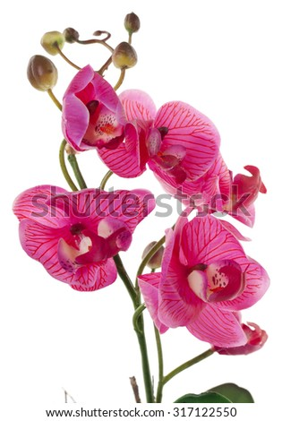Pink Orchid with buds isolated on a white background - stock photo