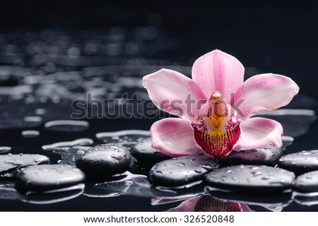 Pink orchid with therapy stones