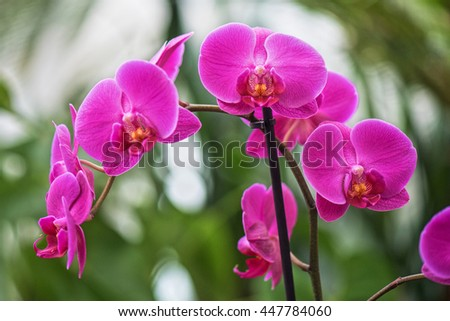 pink orchids at botanical garden - stock photo