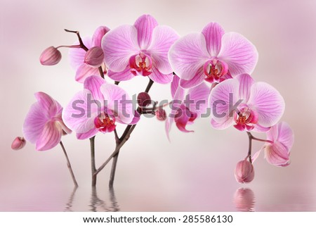 Pink orchids flowers - stock photo
