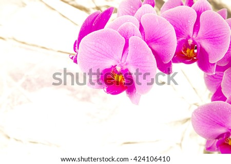 Pink orchids on silver background , amazing ,lovely ,natural ,fresh ,spring flowers ,colorful ,bloom ,purple ,stem ,closeup ,macro , violet, petals, long plant ,many ,together ,decoration