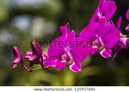Pink Orcids in the garden - stock photo