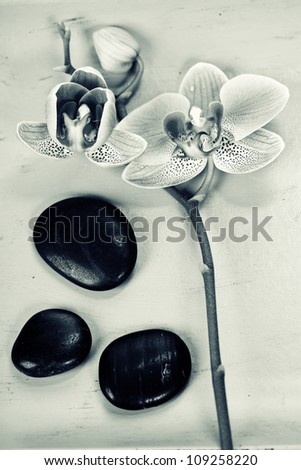 Pink orhid and Zen pebbles on a green bamboo plate. Spa and healthcare concept - stock photo