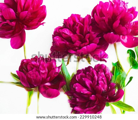 Pink painted roses and green leaves on white background - stock photo