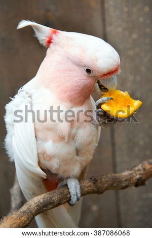 Pink parrot and piece of orange.