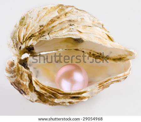 Pink pearl is in a shell. - stock photo