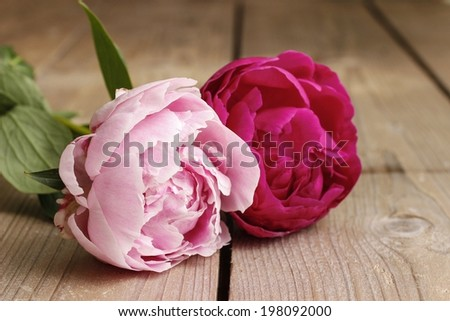 Pink peonies on wooden background - stock photo