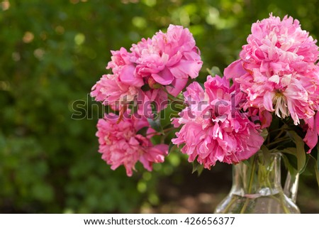 Pink peonies outdoor