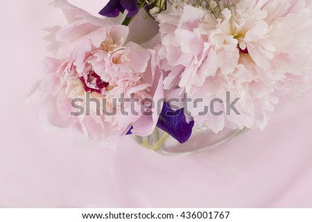Pink Peony Flower isolated against pink background