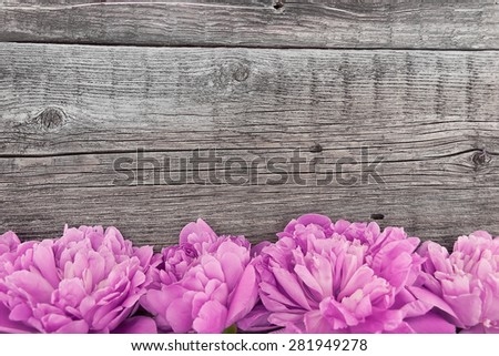 Pink peony flower on dark rustic wooden background with copy space for greeting message. Mother's Day and spring background concept - stock photo
