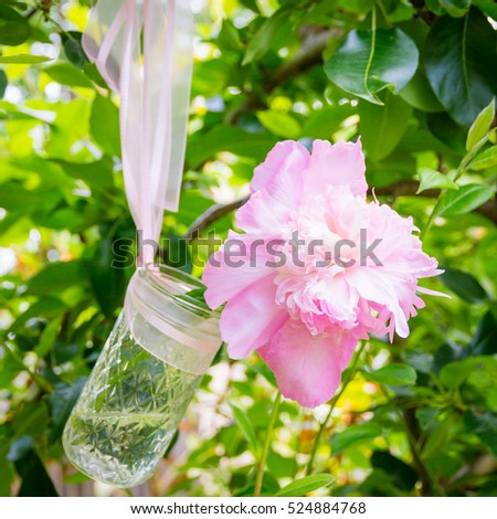 Pink peony flowers  in a glass jar hanging on a tree branch in green  fresh spring garden,