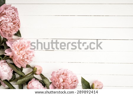 Pink peony flowers on white vintage wooden background. Copy space, desaturated colors. Wedding, gift card, valentine's day or mothers day background  - stock photo