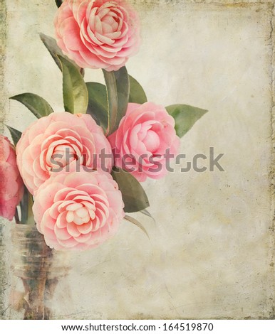 Pink Perfection Camellias in an antique medicine bottle. Photo has been creatively textured for painterly, vintage look. Good background for mother's day or something feminine. - stock photo
