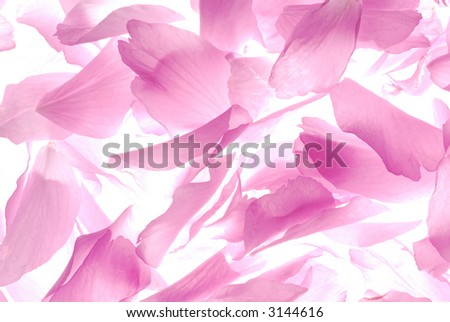pink petals on light box