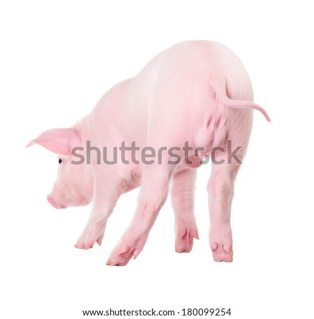 Pink piggy back view. Isolated on white background