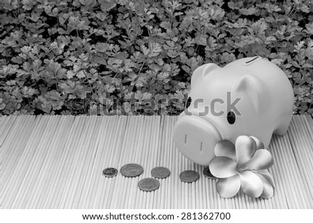 pink piggy bank and coin on parsley garden background in black and white tone - stock photo