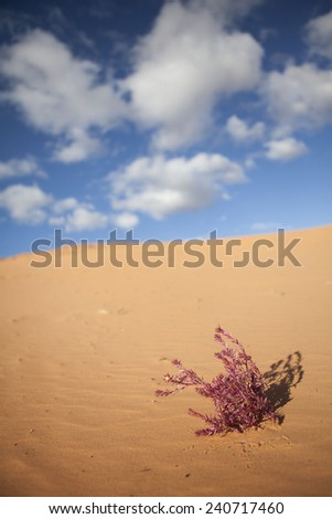 Pink plant in the sand  - skyline and clouds above  - stock photo