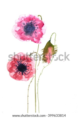 Pink poppy flowers on white, watercolor hand painted on paper