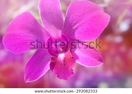 pink purple orchid in soft color style for Abstract background.