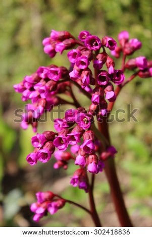Pink red statice filler flower stock photo 302418836 shutterstock pink red statice filler flower mightylinksfo