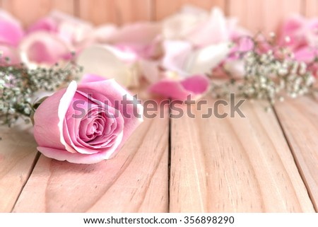 pink rose and petals for lover on wooden table  with copy space, beautiful flower, love concept for valentines day, wedding, anniversary, congratulations and birthday - stock photo