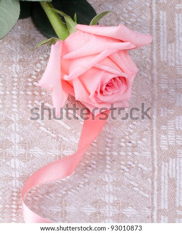 Pink rose and pink bow