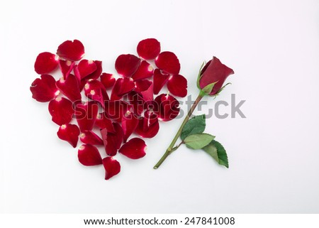 pink rose and red rose petals forming heart shape and red rose on white background - stock photo