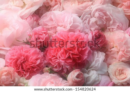 Pink  rose background. - stock photo