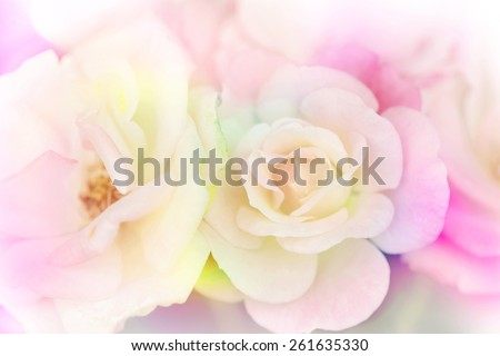 Pink rose background,Flower blur background - stock photo