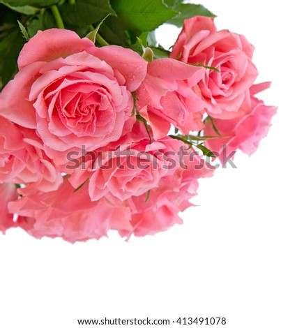 Pink rose  bouquet isolated.